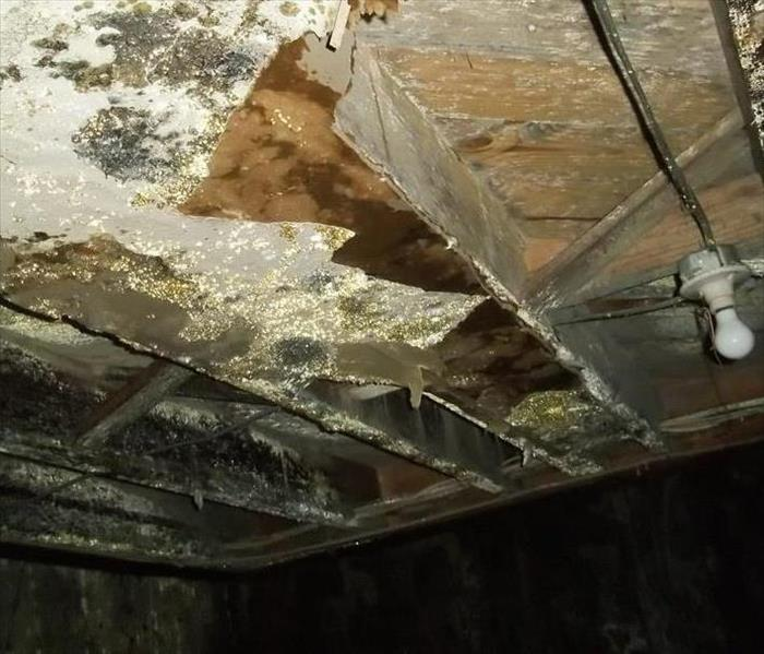Mold Remediation Does Your Hall County Home Have a Mold Problem?